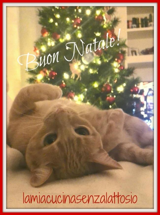 Buon Natale micia